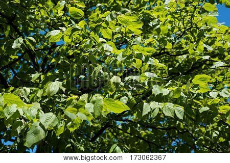 View of green leaves on a sunny day