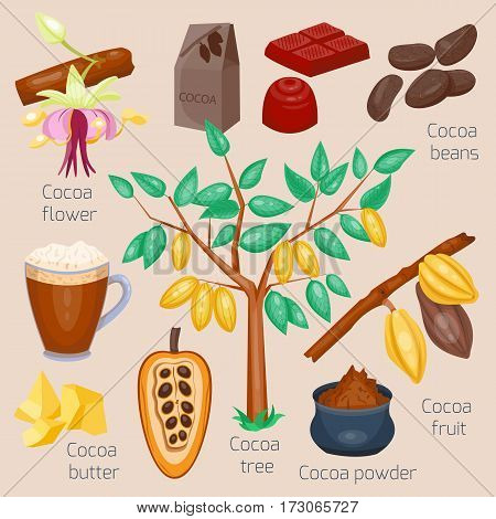Set of cocoa. Chocolate tree. Vector illustration. Cartoon style.