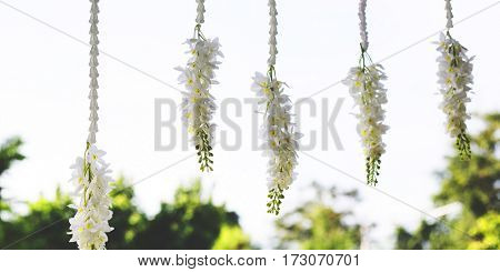 Flower Decoration Freshness Beautiful Ornament
