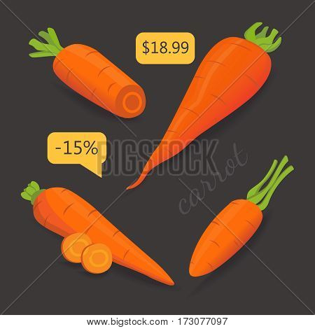 Set carrot vector illustration. Sliced fresh carrot