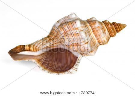 Close-up of sea shell isolated on white - image01. Bottom view. Clipping path included. poster