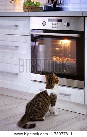 Cute cat looking at tasty pizza in oven