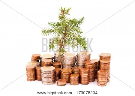 Coins and tree isolated on white background
