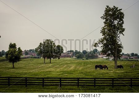 Country Estate With Horses In The Field