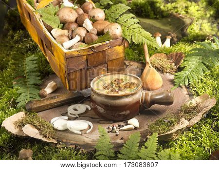 soup with mushrooms stump tree wood moss forest knife garlic salt