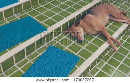 Dog Sleep In Outside The House.
