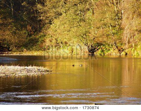 Frosty Riverbank  Deveron Riverb