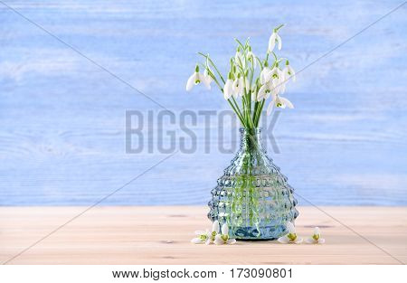 bouquet of fresh snowdrops flowers in a glass vase on table and blue background