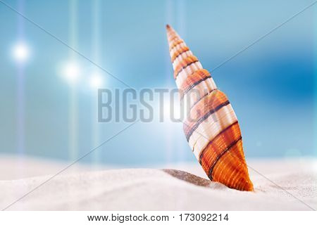 bright sea shell on white beach sand under the sun light, shallow dof