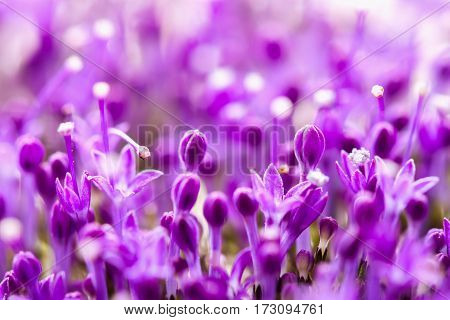 Fine fresh abstract lilac flowers close-up, macro view. Beautiful natural floral background, always fashionable modern color. Concept of vivid moments life.