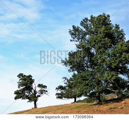 Small Oak and Big Oak relax in the sun of a bright late Summer day