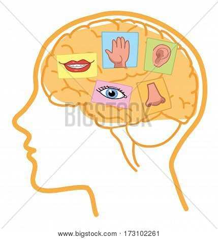 Senses illustration. Sight, hearing, taste, smell and touch in human brain.