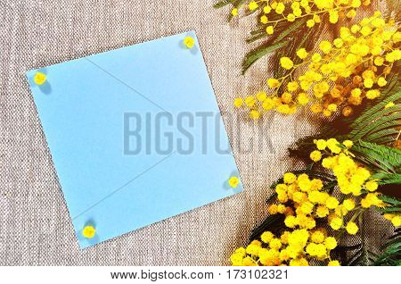 Spring Easter background -mimosa flowers and blue card with space for Happy Easter text. Spring Happy Easter background