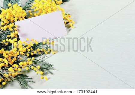 Spring background - mimosa spring flowers and blank card with free space for text. Nature spring background with yellow spring mimosa flowers and blank card for any spring holiday message