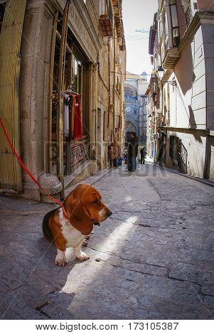 Dog Sitting On The Street Of Toledo, Castilla La Mancha, Spain