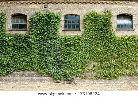 Grape leaves covered the walls of the old building