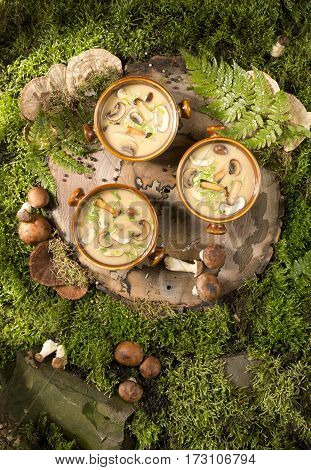 soup with mushrooms stump tree wood moss forest knife garlic saltraspberry stump forest blueberries delicious beautiful fern moss grass green basket