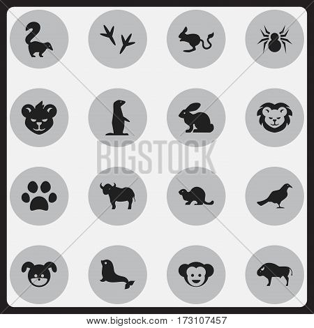 Set Of 16 Editable Zoology Icons. Includes Symbols Such As Bunny, Tiger, Sea Calf And More. Can Be Used For Web, Mobile, UI And Infographic Design.