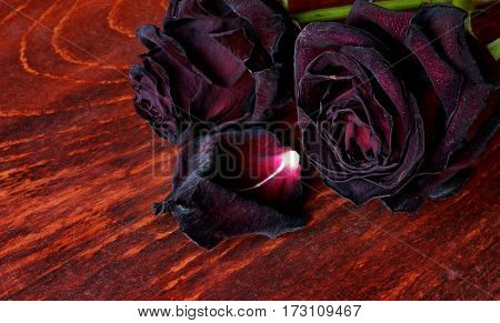 Faded roses on a dark surface. Symbol of broken heart.