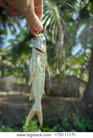 Amateur Fishing In India 2. Parvati Fish