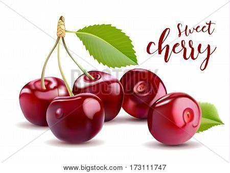 Sweet Vector 3D Realistic Cherry, isolated on white background