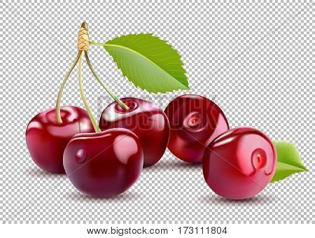 Sweet Red Cherry. Realistic isolated vector cherry