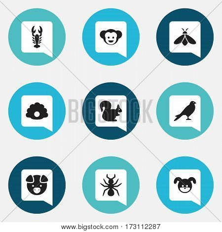 Set Of 9 Editable Zoology Icons. Includes Symbols Such As Wild Rodent, Eagle, Honey And More. Can Be Used For Web, Mobile, UI And Infographic Design.
