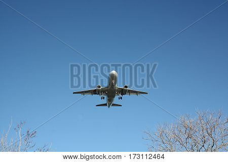Airliner just above tree tops comes in for a landing silver body against blue sky