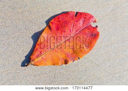 Fallen red leaf lies on the fine sands.