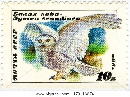 USSR - CIRCA 1990: A Stamp Printed In USSR Showing White Owl Circa 1990