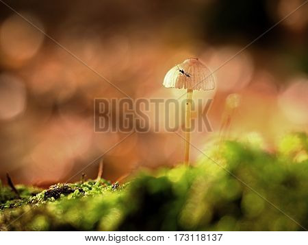 Single White Fungus, Beech Leaves In  Autumn Forest.