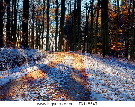 A Path Trough Forest With Leaves Bellow First Snow