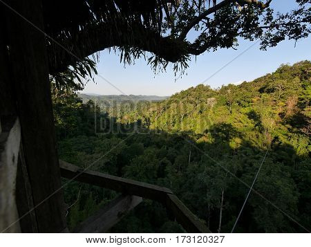 View on a green jungle with high trees and tropical vegetation from a tree-house