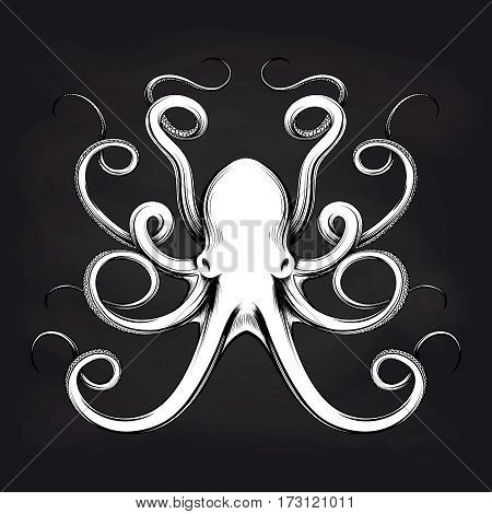 Black and white octopus sketch design on blackboard background. Vector illustration