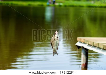 Caught fish close-up on the fishing rod, hot summer day. Concept of rural getaway, relaks
