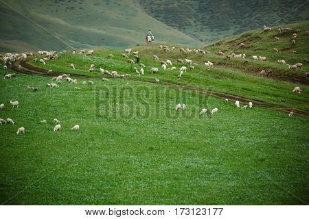 Shepherd with flock of sheep pasturing in mountains