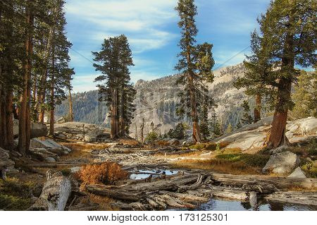 High Sierra lake in the Redwood forrest