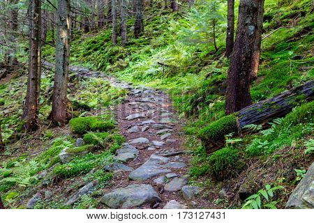 nice scene with mountain pathway in deep forest