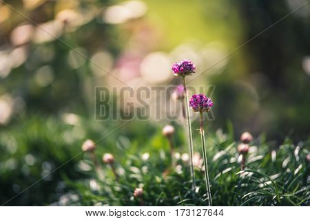 Image of pink blossoms growing in a garden.
