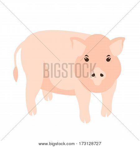 pig vector illustration Flat style side profile
