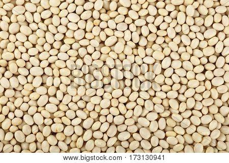 White Frigole Kidney Beans Close Up Background