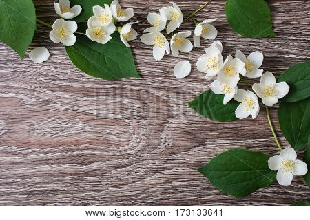 Frame of white flowers and jasmine petals lie on the wooden background. Wedding invitation card. Space for text and design. Jasmine frame