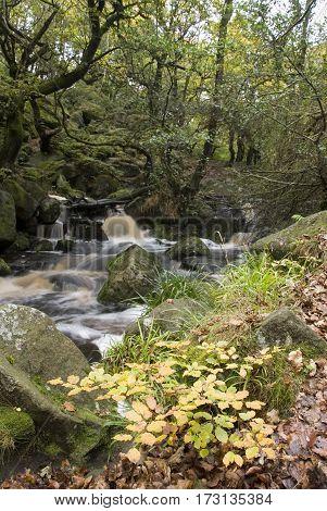 Derbyshire, UK-16 Oct 2014: Burbage Brook flows through autumn woodland on 16 Oct Padley Gorge, Longshaw Estate, Peak District