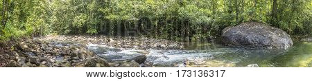 Trees And Creek In The Wild Jungle Of Dominica