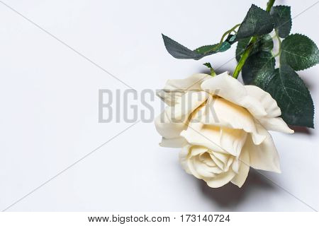 Pale yellow rose on a light background close up with space for text.
