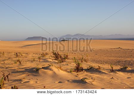 Slope hill sand on yellow dunes on sky background. Sunrise, morning. Sustainable ecosystem. Canary island, Fuerteventura