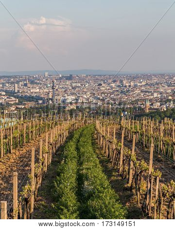 Wineries in Vienna's kahlenberg at the start of the season before the vines have started producing grapes. Part of the Vienna skyline can be seen.