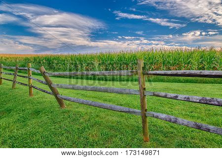 Horizontal shot of a mature corn field with a wooden fence and a blue sky with clouds.