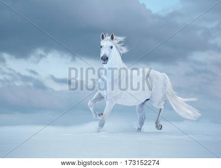 White horse runs on snow on sky background