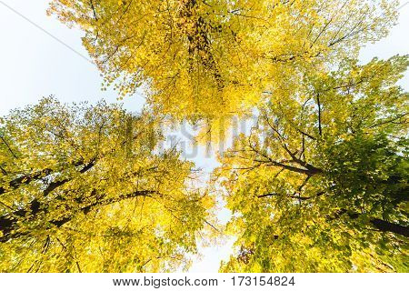 Autumn colors in Vienna showing trees and bright yellow leaves